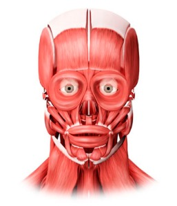 Medical Illustration Facial Muscles