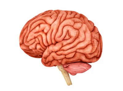 Anatomy of human brain.