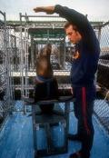 Sea Lion Trainer
